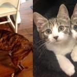 Missy Allie Annie shelter adopt