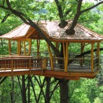 nay aug park treehouse scranton
