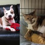 hund anna shelter adopt