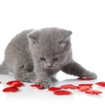 cat Valentines for Felines Indraloka