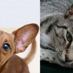 ren miss lucky shelter adopt