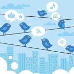 twitter networking tweet birds