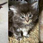 fritz kion kiara shelter adopt