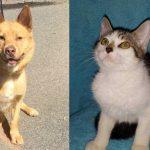 rojo-sara-shelter-adopt