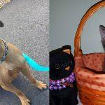 benji-amber-shelter-adopt