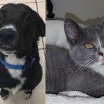 milo-sylvia-shelter-adopt