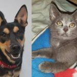 newman-smokey-shelter-adopt