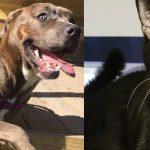 dakota skittles shelter adopt