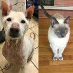 Primo Murriah shelter adopt dog cat