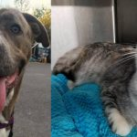 dakota missy shelter adopt dog cat