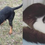 dover buttercup shelter adopt dog cat